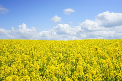 Millions of drivers at risk of hay fever medication side effects