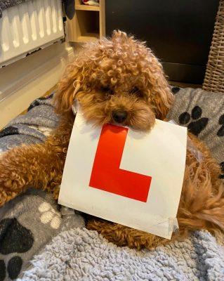 Trowbridge Driving Test pass